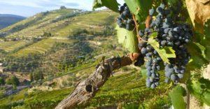 porto-wine1
