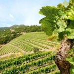 Виноделие в Чили